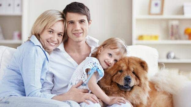 Wills & Trusts dog-young-family Direct Wills Tamworth